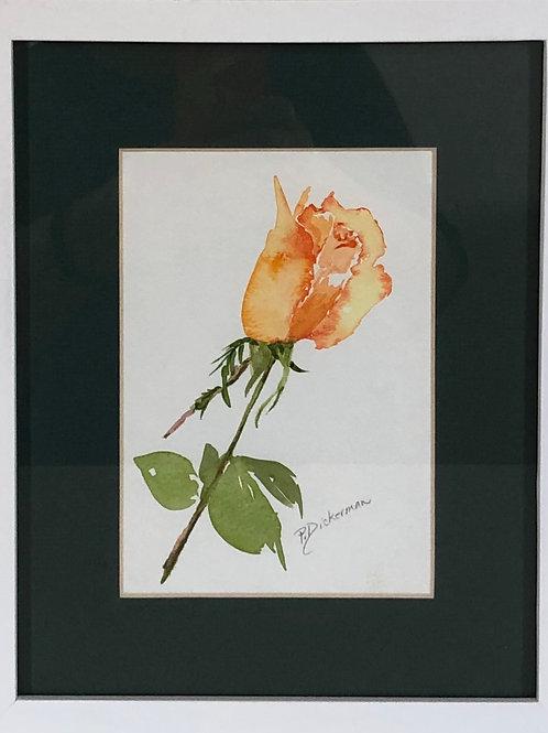 """Yellow Rose"""