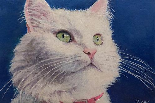 """""""White Kitty"""""""