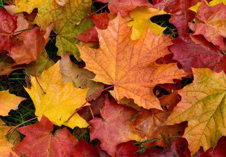 Accueillons en douceur l'arrivée de l'automne ...