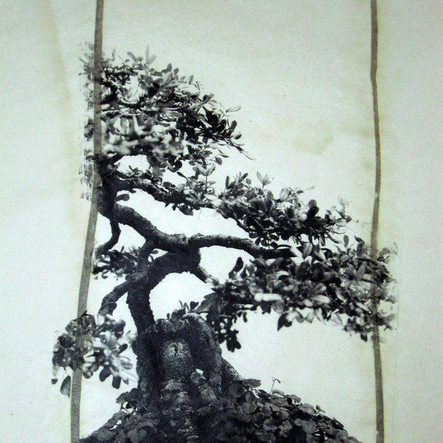 Bonsai No.2