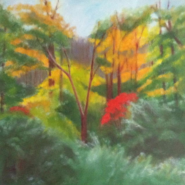 Red Leaves in the Woods