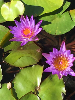 Lotus photo 3