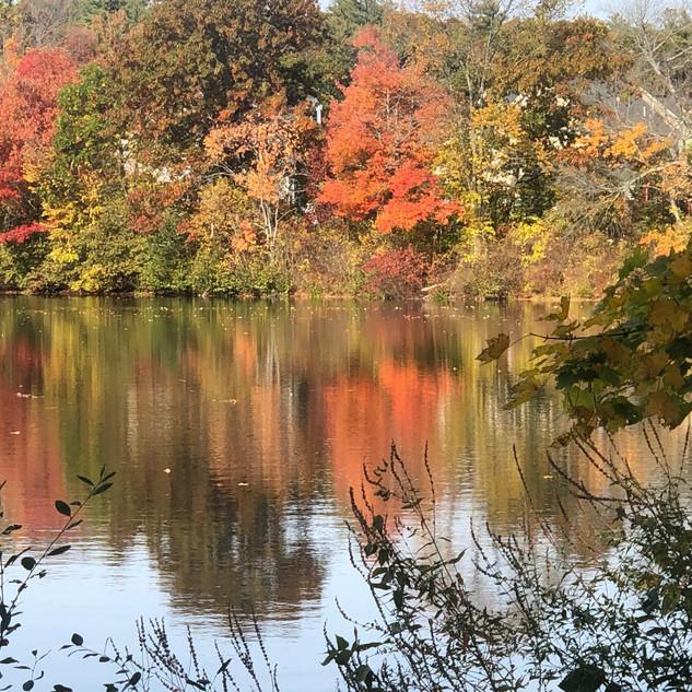 Autumn Colors 1