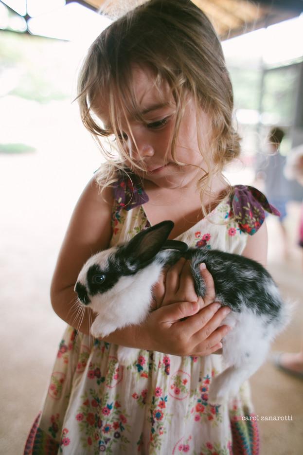 pequenas histórias · o coelho