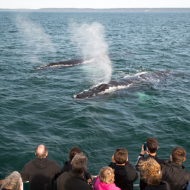 Whale watching, something everyone wants to do.  This is where the whales come to watch the people.