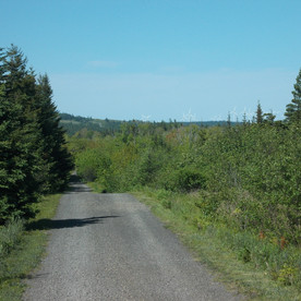 Enjoy the drive down the private road to the cottages.