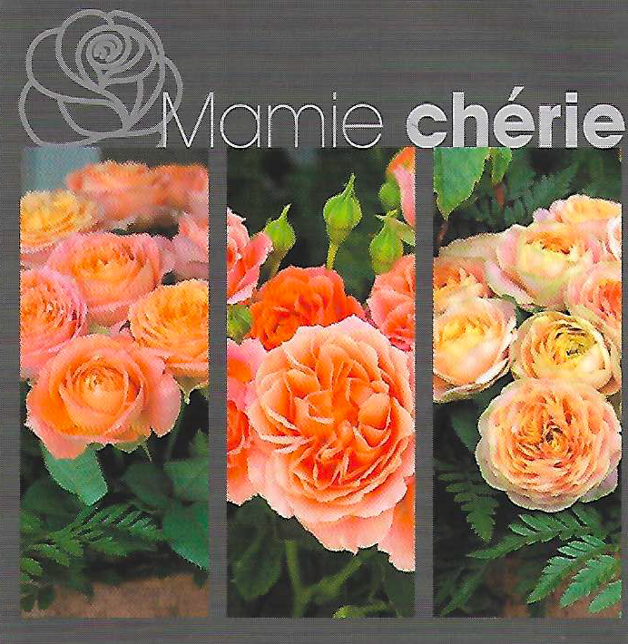 MAMIE CHERIE.png