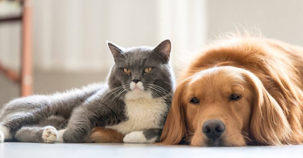 A cat and dog are lying on the ground together.