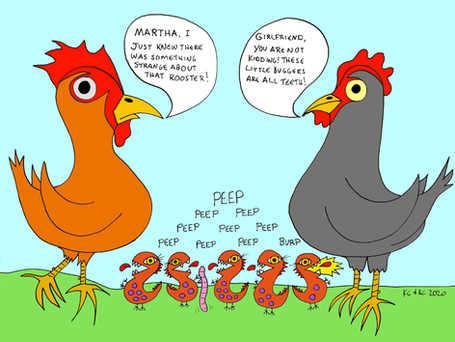 Strange Rooster