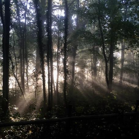 Van de bomen en het bos