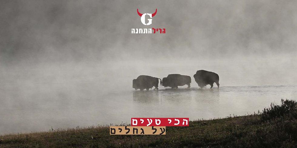 American-Bison-Download.jpg
