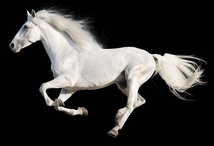 סוס לבן דוהר על רקע שחור
