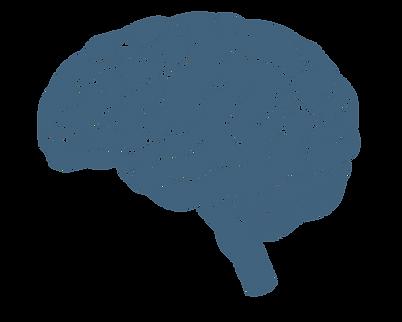 Human anatomy - piccolo מוח.png