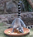 taller alimentació i nutrició escoles lemur