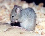 ratolí menjant taller nutrició i alimentació escoles