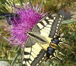 papallona rei tallers natura entorn escola