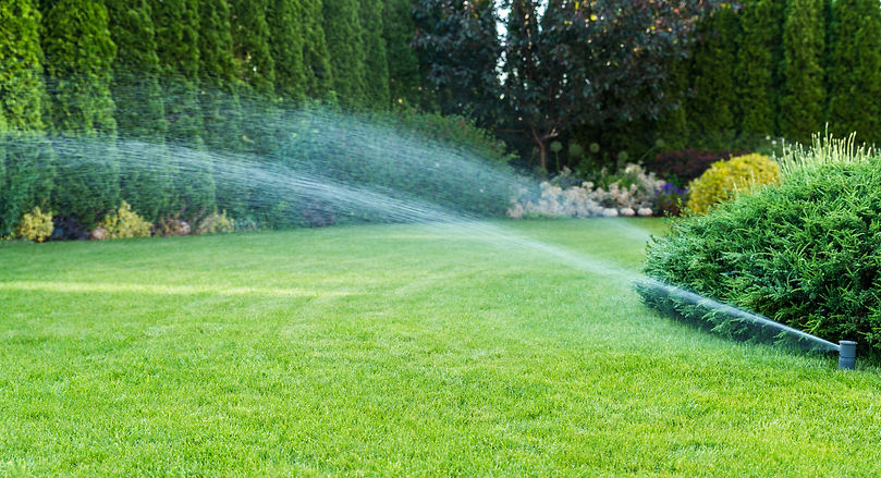 Irrigation of the green grass with sprin