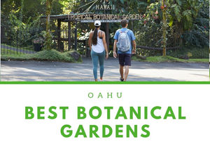 In This Article, Weu0027ll Give You Everything You Need To Tour The Botanical  Gardens On Oahu!