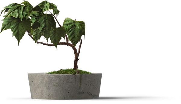 001_0002_Plant-[20%].png