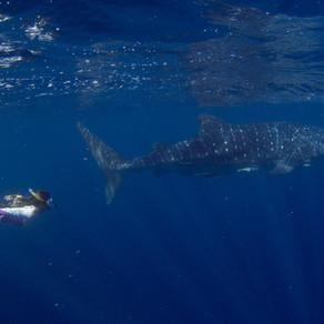 Westaustralien · Teil 4 · Shark Bay → Exmouth