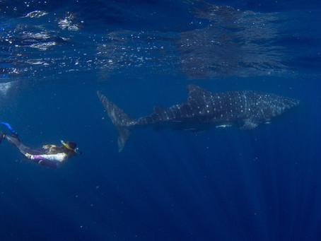 #23 Westaustralien · Teil 4 · Shark Bay -> Exmouth