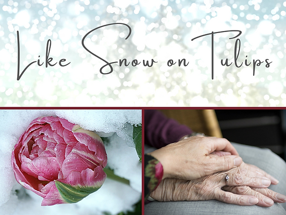 Snow on Tulips website image.png