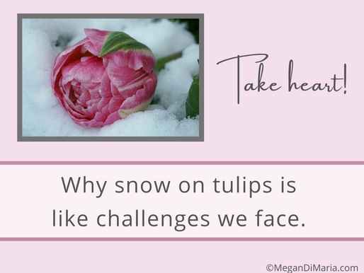 Snow on Tulips and Challenges you face