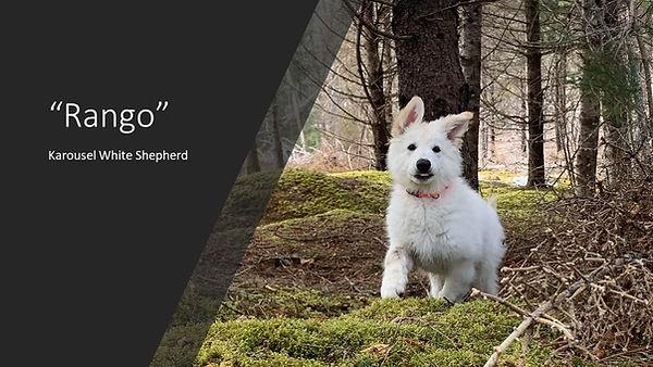 Rango puppy.jpg