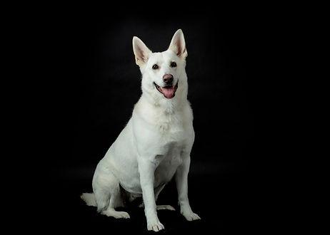 Dogs23 face noir.jpg
