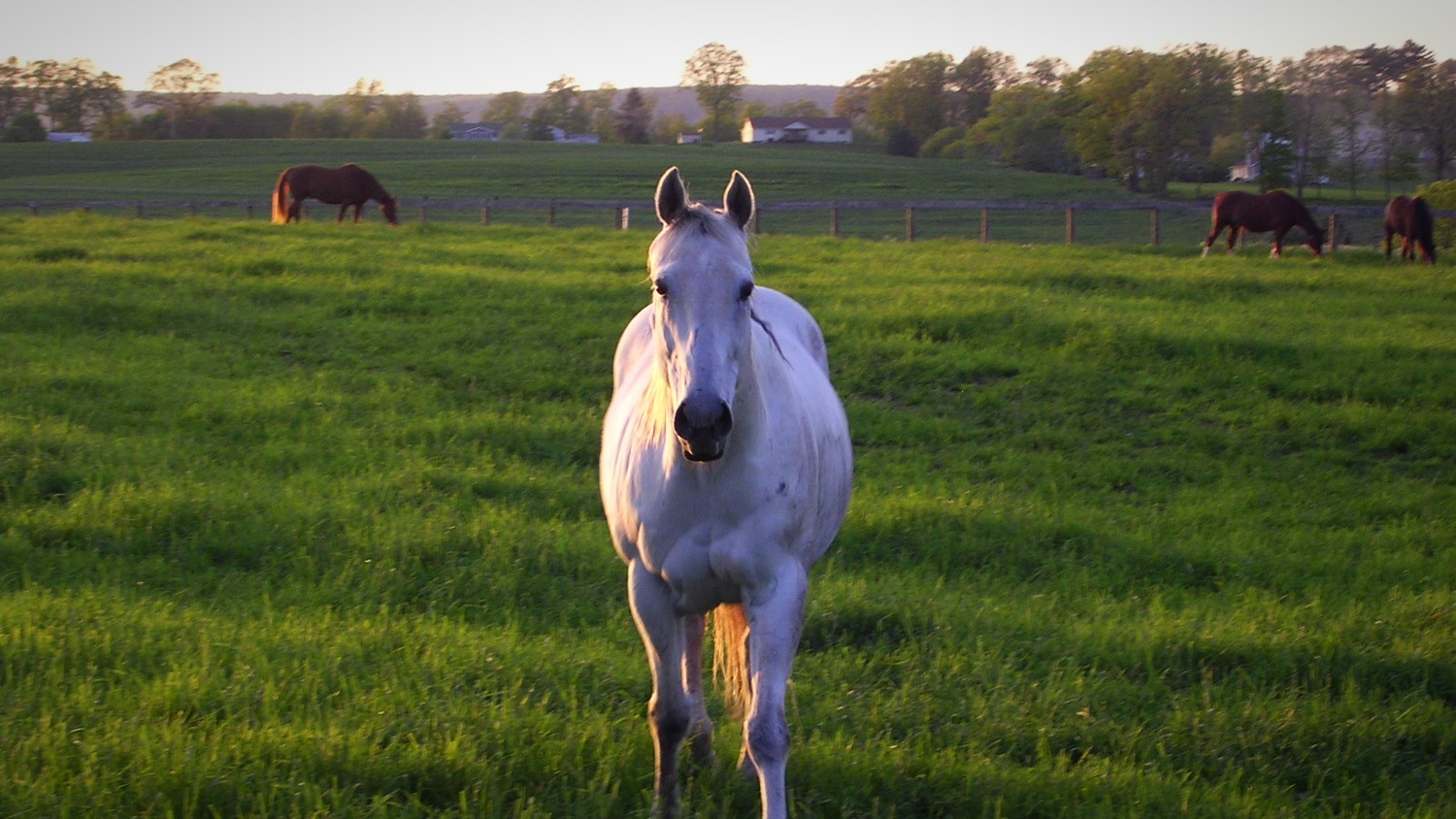 Plushy, retired TB racehorse enjoying his retirement after purchase from auction by owner.