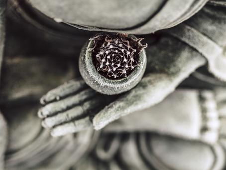 Meditation, Mindfulness & Metacognition