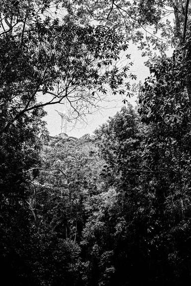 Cristo redentor (1922-1931)  Heitor da Silva Costa, Paul Landowski & Albert Caquot  Rio de Janeiro, Brasil   . Analogic 2016 © Jérémy Pernet