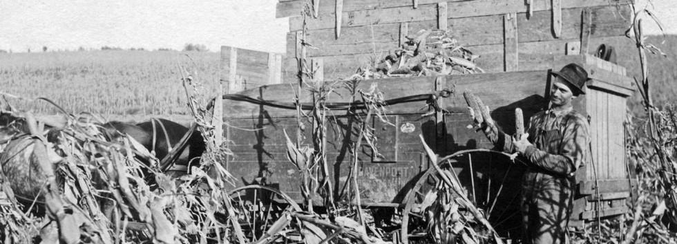 Harry H. Wilkins in Corn Field