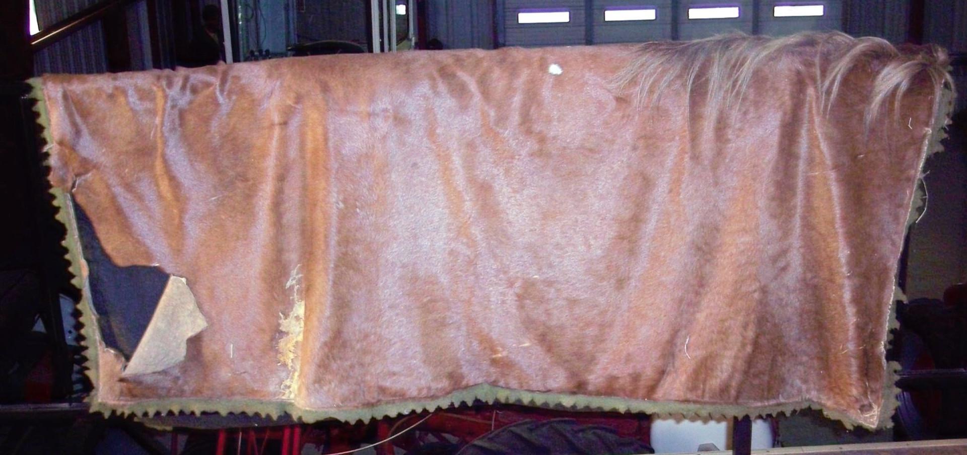 Torn Horse Blanket_edited.jpg