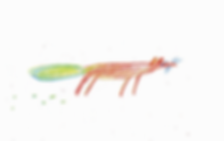 Bec Elliott, Bec Elliott Illustrator, Childrens illustrations, fox illustration, animal illustrations
