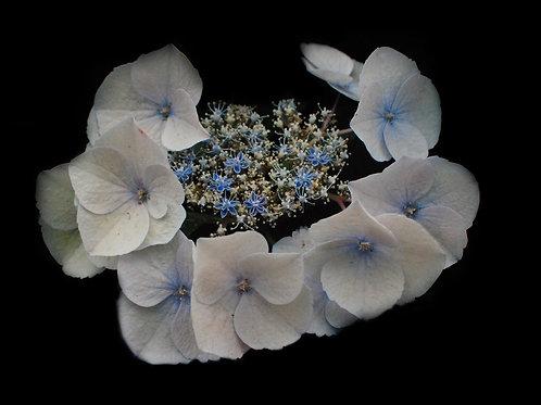 Flower, Liz De Jesus