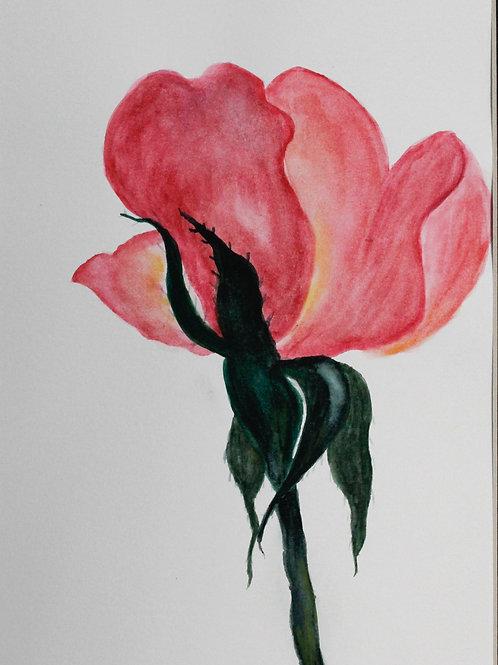 La Vie En Rose, Mila Boskocevic