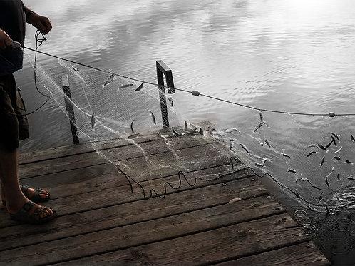 Fisherman, Emma Suvacarov