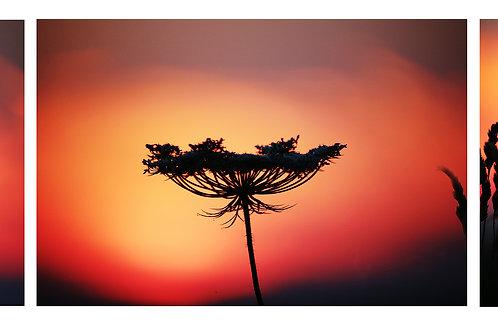 Sunset, Emma Suvacarov
