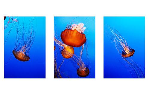 Jelly Fish, Leah Posada