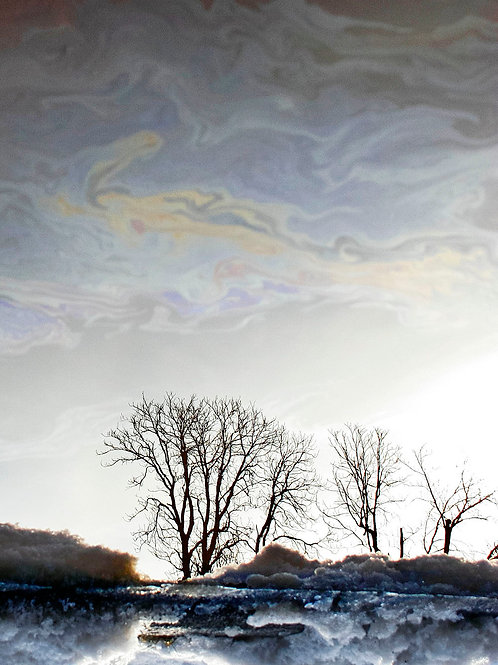 Reflection, Jovanna Wood