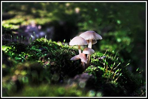 Mushroom, Alina Pulbere