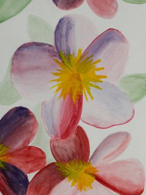 Pastel Plumeria, Katherine Arroyo