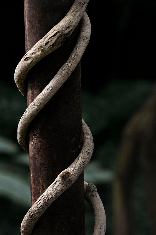 Twisty Branch, Leah Posada