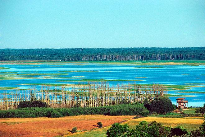 Hornborgasjön.jpg