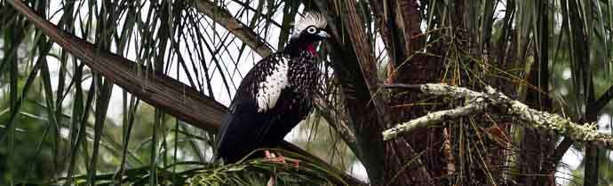 Birding in Argentina: BIRDING IN IGUAZU FALLS