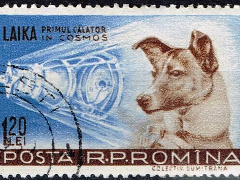 Laika e il suo viaggio senza ritorno.