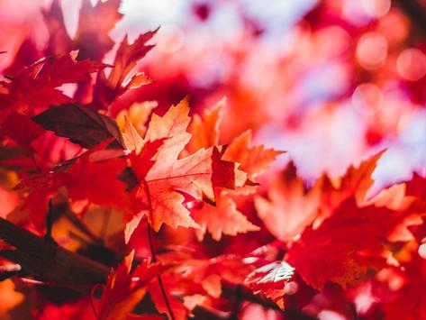 Il caldo rosso dell'autunno.