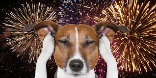 July 4th Fireworks are not for my dogs!