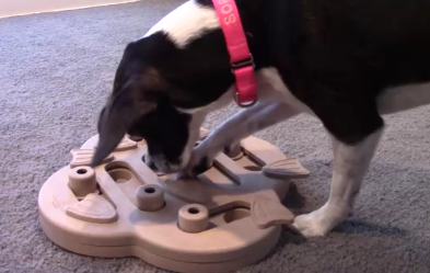 Review: Nina Ottosson Hide N' Slide Dog Puzzle Toy from Outward Hound